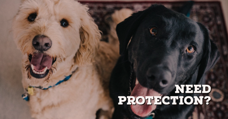 Is a dog fit to protect your home?